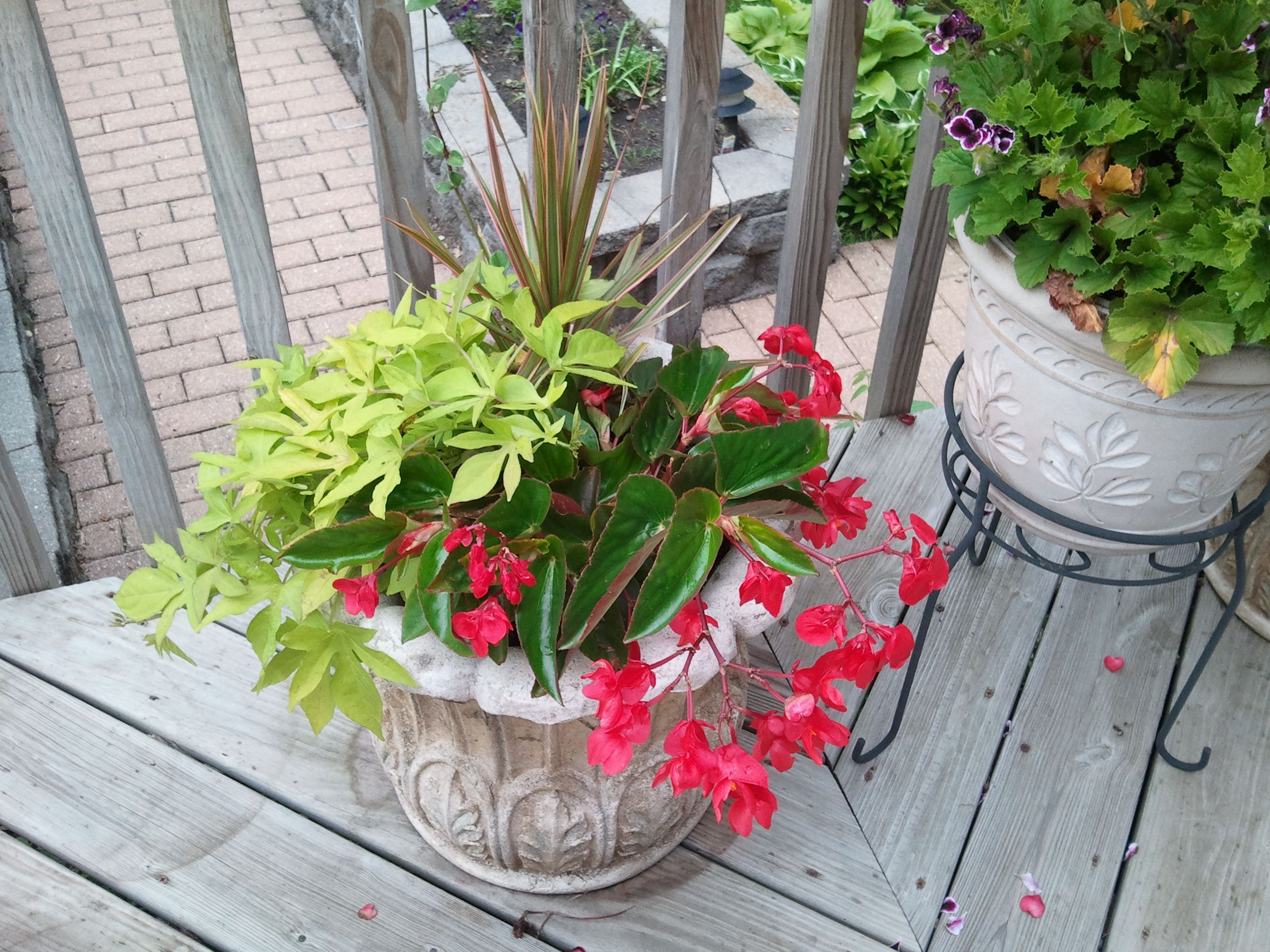 another potted plant for my garden