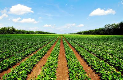 bangaloreadvocates: Purchase of Agricultural land