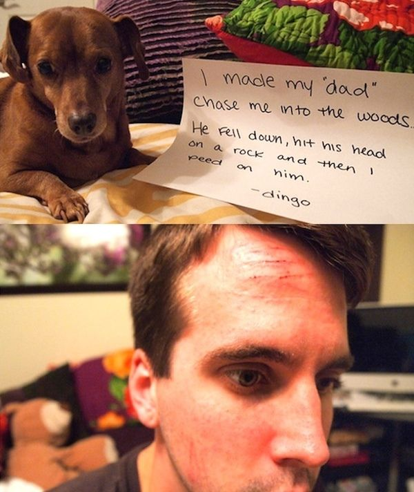 14 Naughty Dogs Who Love Their Dads And Dad S Stuff Dog Shaming Cute Funny Pics Animal Shaming