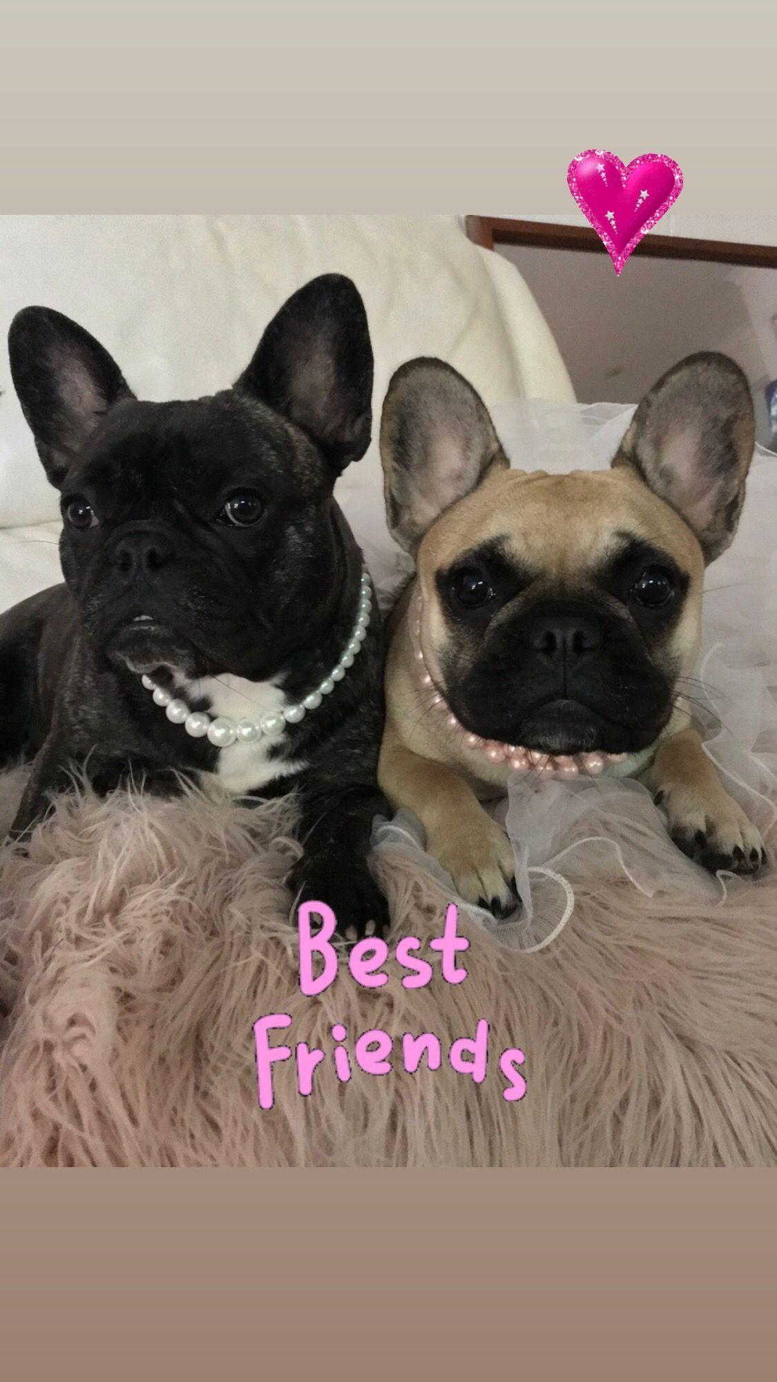 Lulu And Mon Cheri Litters Due Soon Follow Us On Instagram