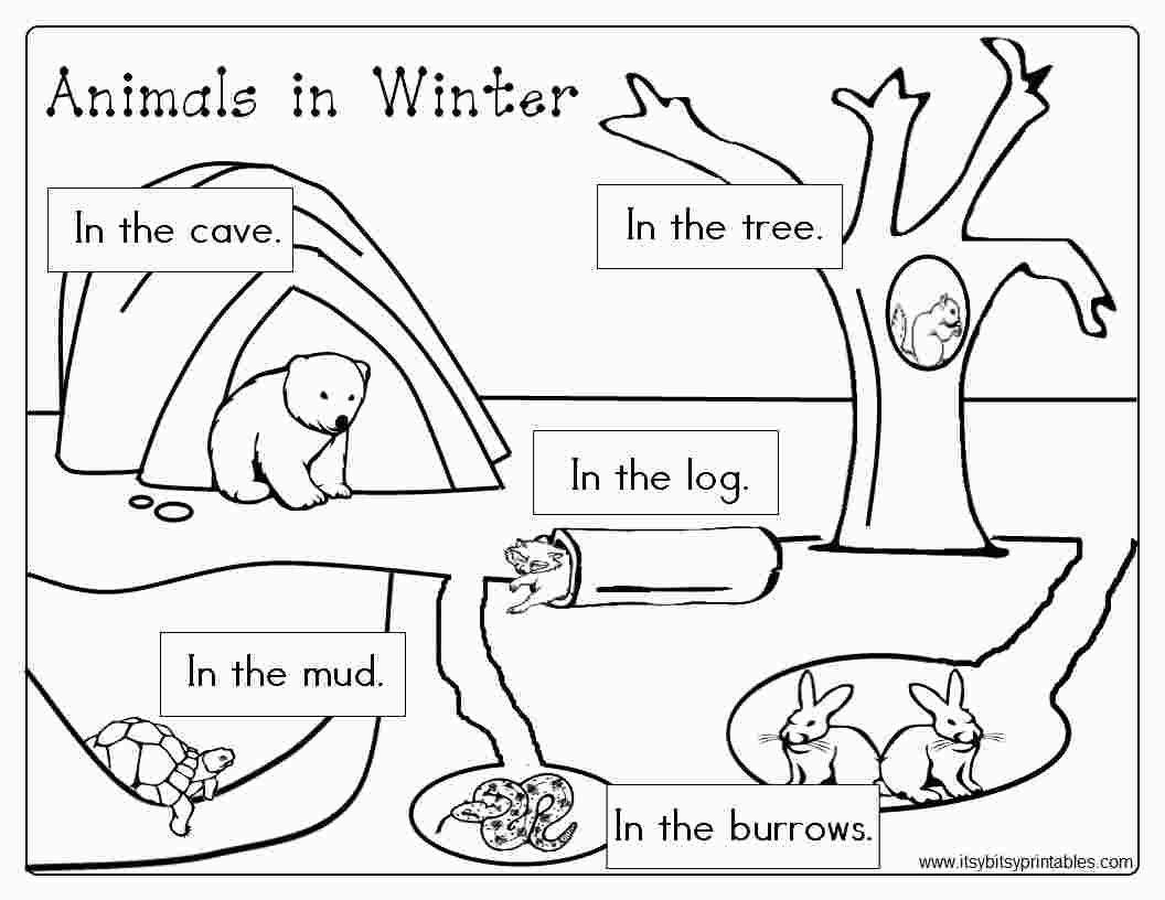 Free Printable Coloring Pages Hibernating Animals With