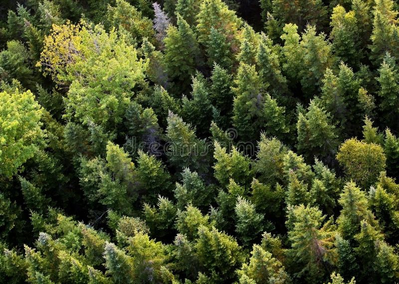 Aerial trees. Aerial view of a forest in Atlantic Canada