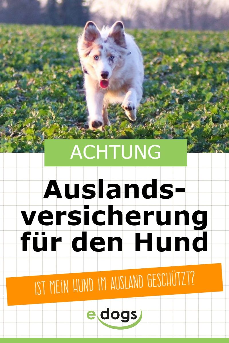 Auslandsversichrung Fur Deinen Hund Hunde Hund Auto Hund Und Katze