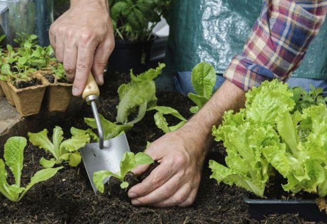 Balkonda bitki yetiştirecekler Ekim ayı önemli! #kräutergartenbalkon