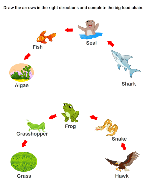 Food Chain Worksheet | Free Worksheets | Worksheets For Kids ...