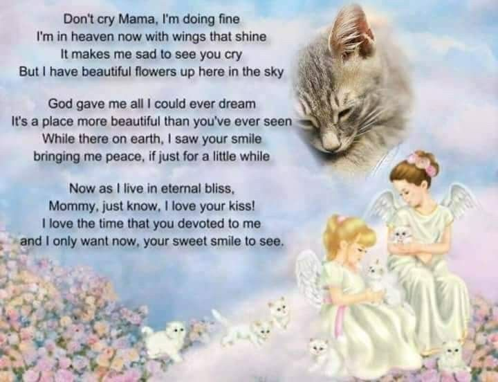 Pin by Vered BenAvraham on animal quotes (With images