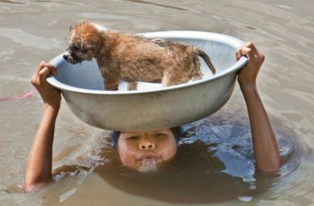 27 Pictures Of People Helping Animals. #5 Will Shatter You.
