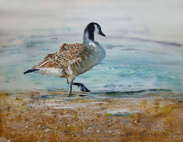 Artist Elizabeth Tyler - Canada Goose watercolour 35 x 46 cm