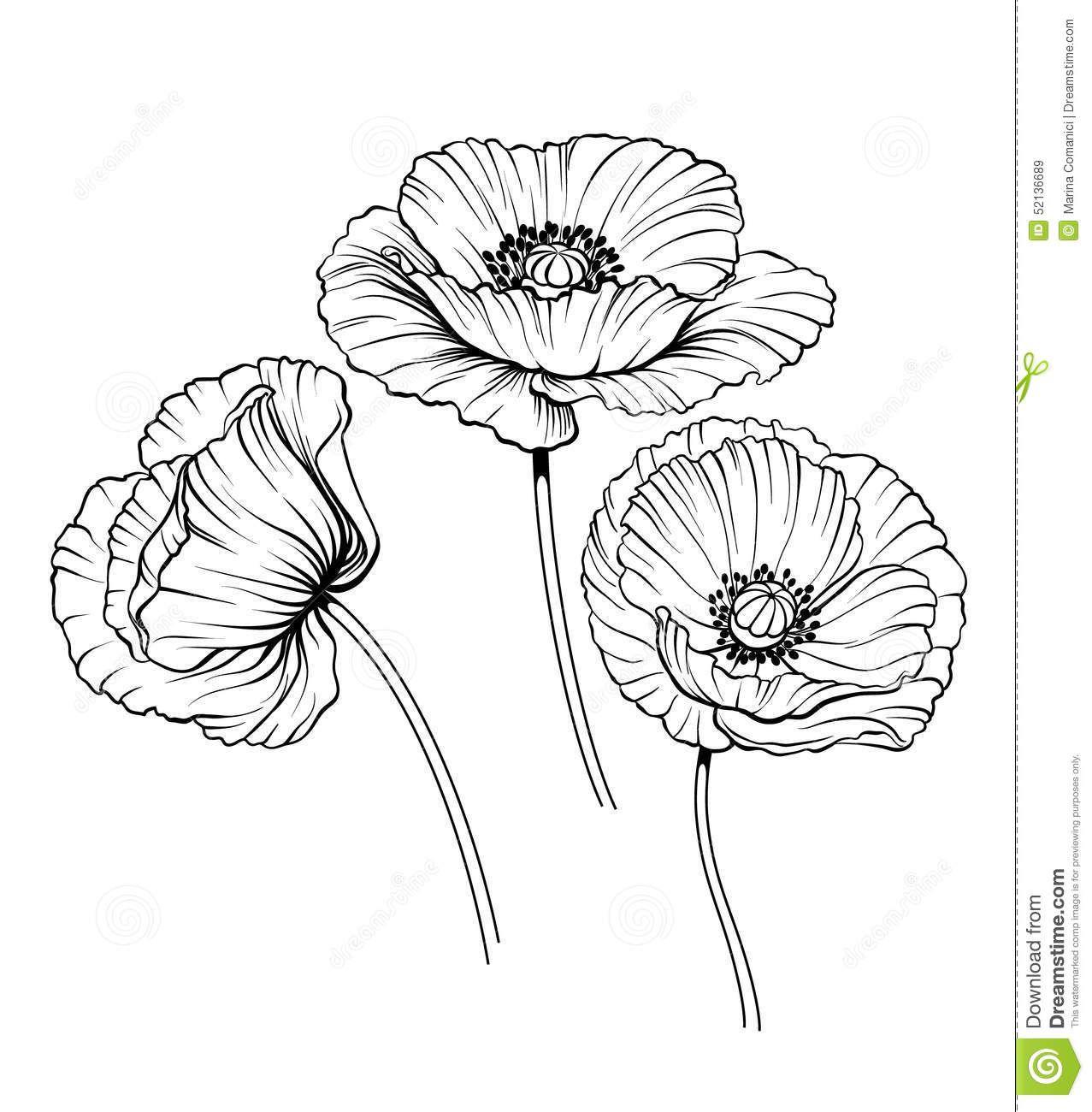 Line Poppies Vector Set