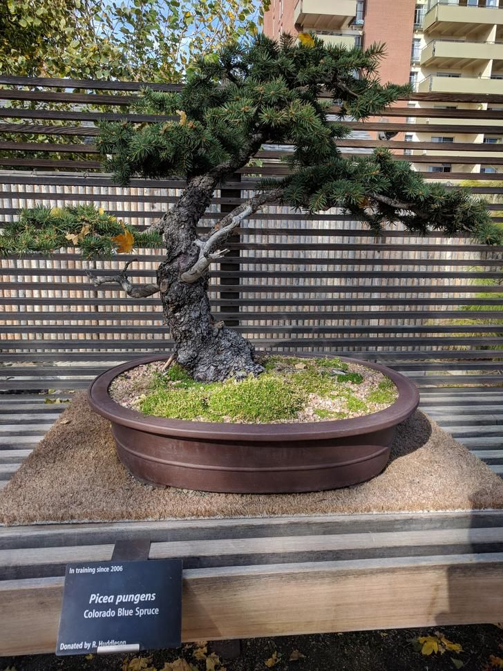 Bonsai At Denver Botanic Gardens Denver Botanic Gardens Botanical Gardens Bonsai