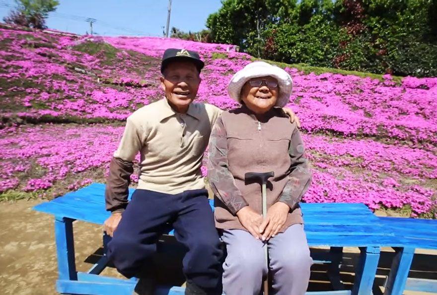 Si le Japon entre doucement dans la saison des cerisiers en fleurs, les yeux sont aujourd'hui tournés vers un spectacle floral quelque peu différent. Un tapis de petites fleurs mauves parfumé…