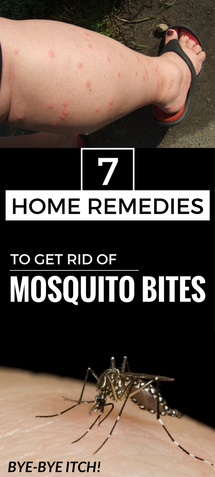 7 Essential Oils to Get Rid of Bugs at Home Remedies for
