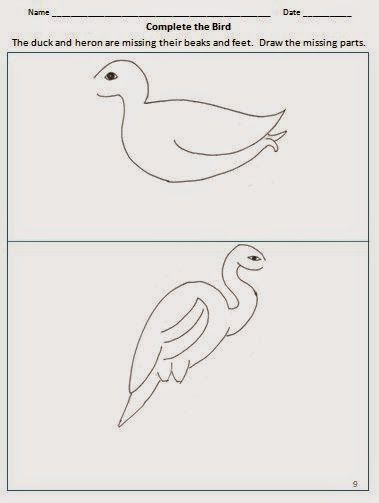 Bird adaptations- worksheet to draw missing beak and feet