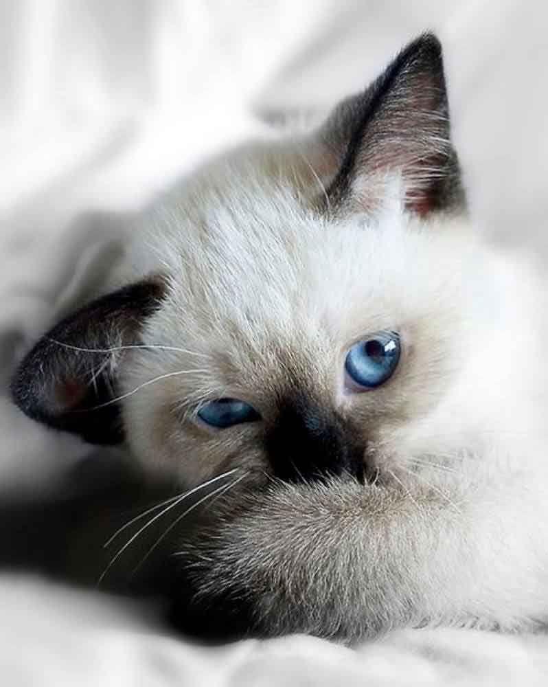 Calico Cutie 22nd March 2019 Bezaubernde Katzchen Lustige Tierbabys Susseste Haustiere