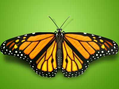 Butterfly by Ioan Decean