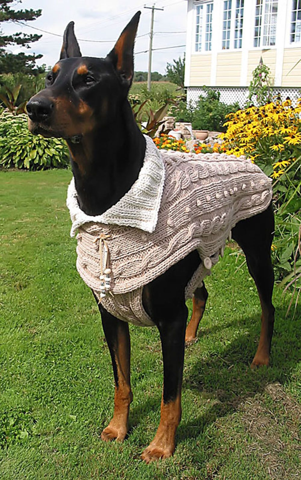 Dog Sweater Luisiana Wwwgabriellapetstylenet Knit And Crochet