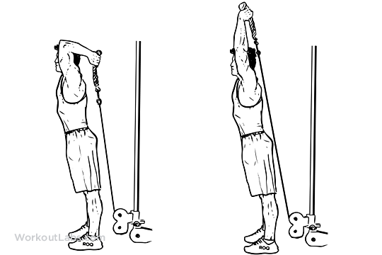 TRICEPS OVERHEAD EXTENSION   Workout - arm   Pinterest ...  Tricep Pulldown Vs Pushdown