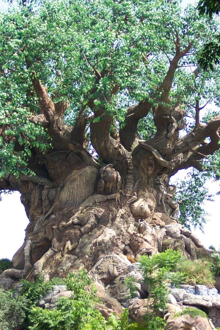 South African Tree with carvings