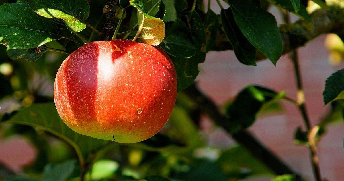 Come coltivare un frutteto in terrazzo quali piante
