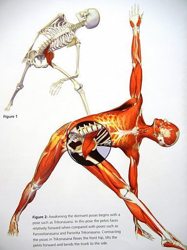 The Proper Care and Feeding of your Psoas Muscle