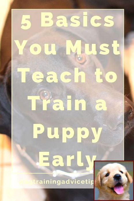 Dog Behavior With Pregnant Owner And Clicker Training Calm Dog