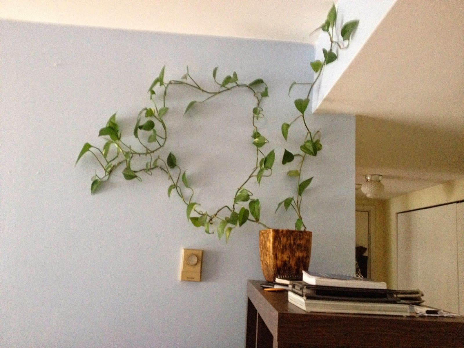 Eye Catching Indoor Climbing Plants | Ideas for the House ... on common vine cactus, common houseplants green, most common flowering houseplants, common houseplant names, common poisonous houseplants, common houseplants philodendron, common vine flowers, common houseplants good in shade, common palm houseplants, common plants, common vine weeds, common succulent houseplants, common houseplants care of,