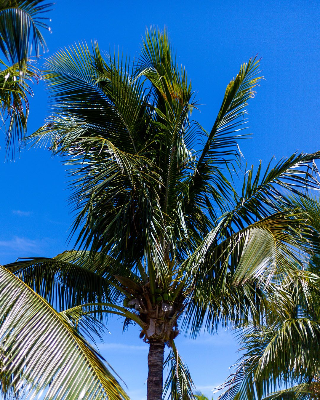 Take Me Where The Palm Trees Grow With Images Cocoa Beach