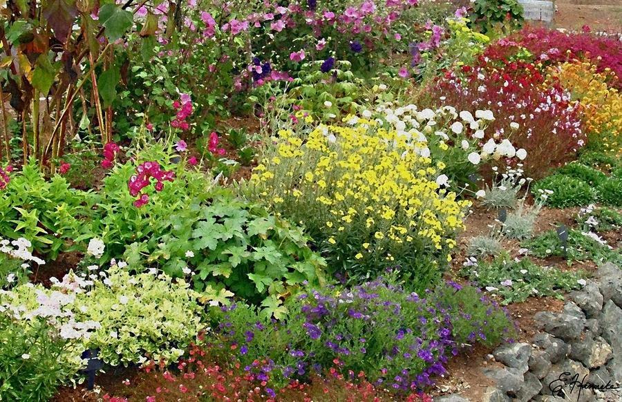 Home Gardening Blogs Google Search Diseno De Jardin