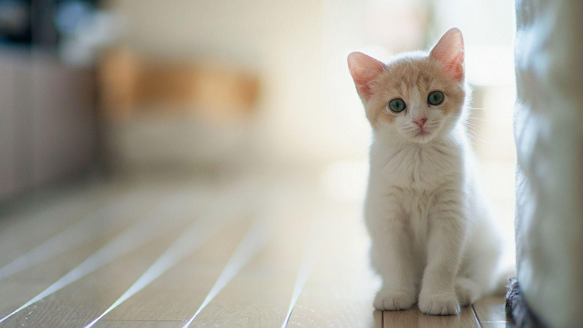 Cute Kittens Wallpapers 1228x768 Pictures Of 68