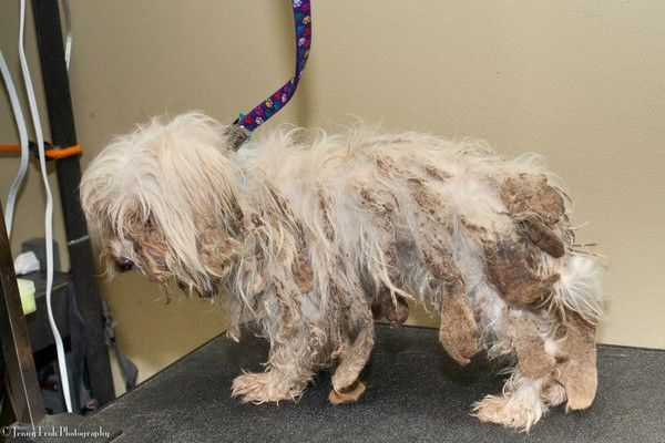 Puppy Mill Dogs Are Victims Of Animal Cruelty Not Texas Law Read