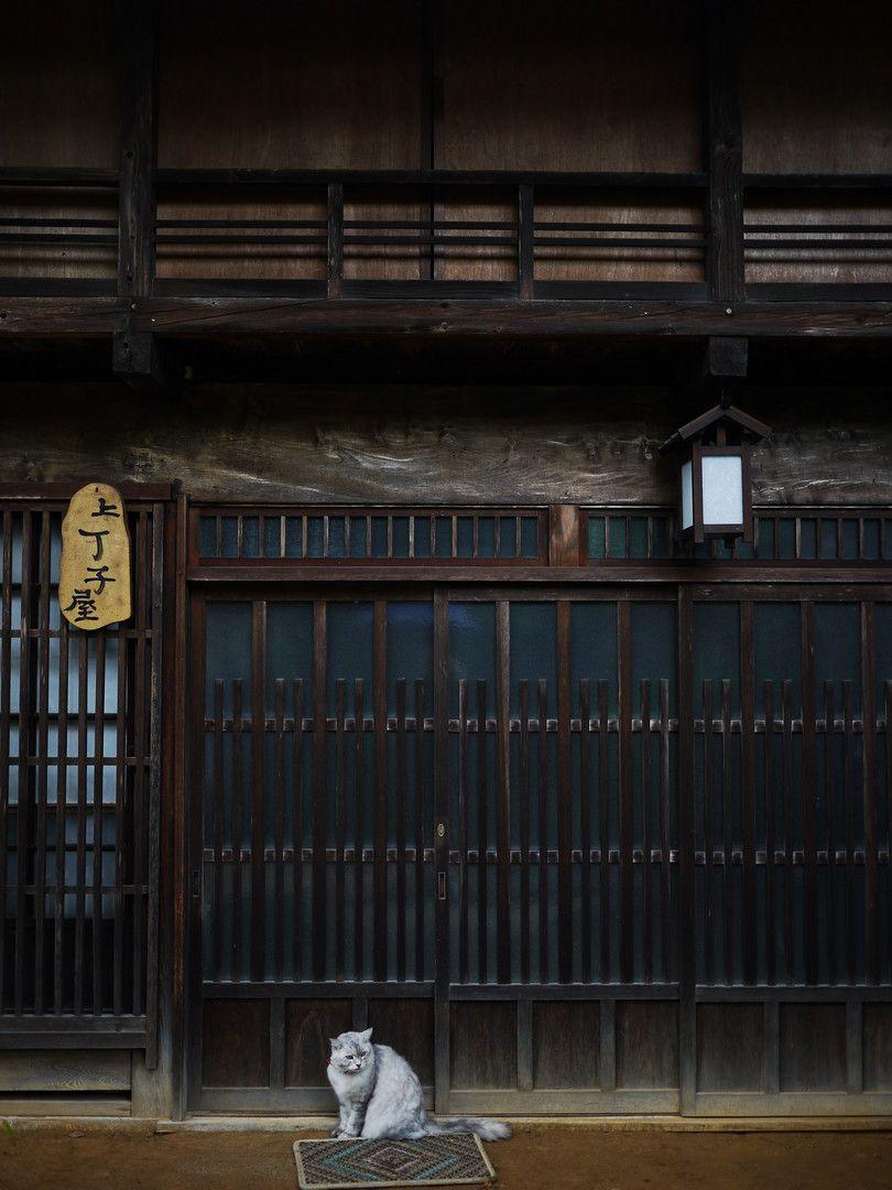 街猫探訪05 長野県 木曽路 妻籠宿 猫 猫大好き にゃんこ