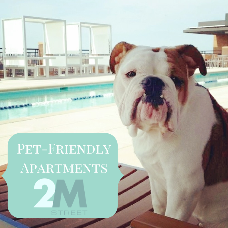 Amenities You Want | NoMa | Pet friendly apartments, Dogs