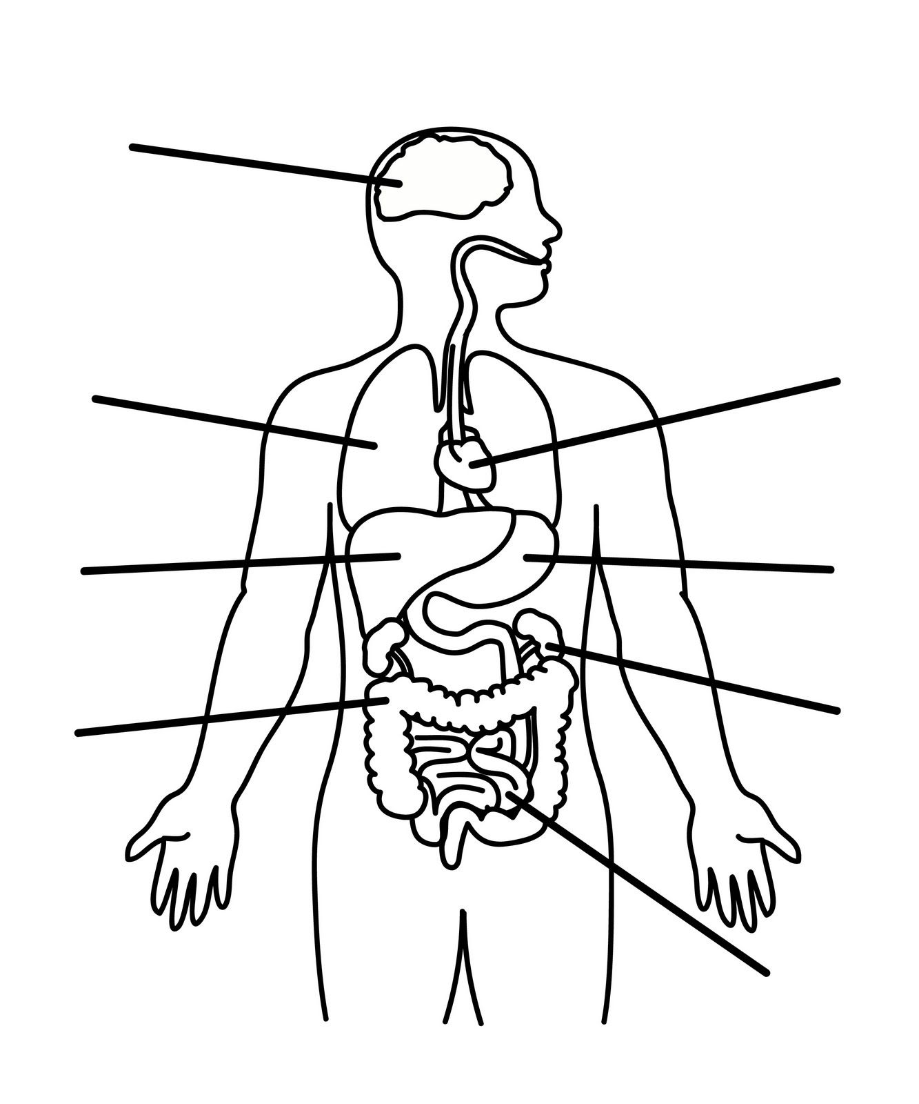 Human Body Anatomy Outline Printable For Kids Science Class Parts Of A Computer Diagram Related