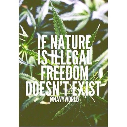 Freedom Illegal And Nature Kep Freedom We Heart It Illegal