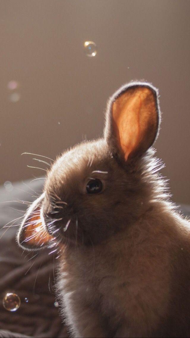 iPhone wallpapers обои cute | Rabbit wallpaper, Animal ...