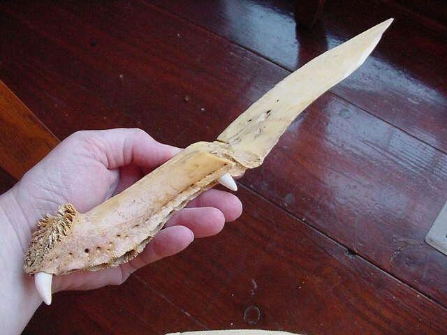 Alligator Bone Letter Opener Ebay Uk Carving Forks Carving Tableware