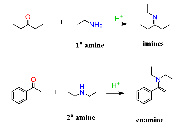Aldehydes and Ketones Reacting with amines forming Imine