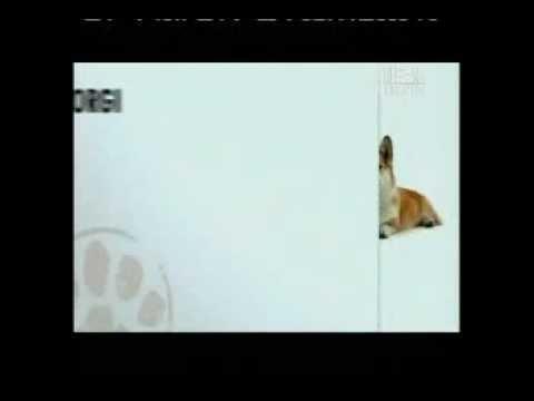 Dogs 101 Cardigan Welsh Corgi Corgi Breeds Corgi Dog Breed