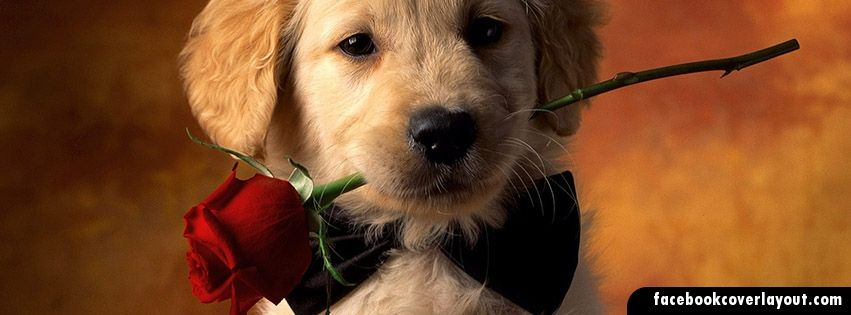 Sweet Puppy With Rose Facebook Timeline Covers Sweet Puppy With