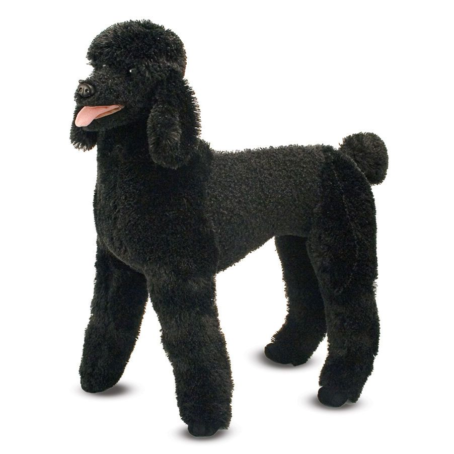Pin On Group Poodles Best Dogs Ever