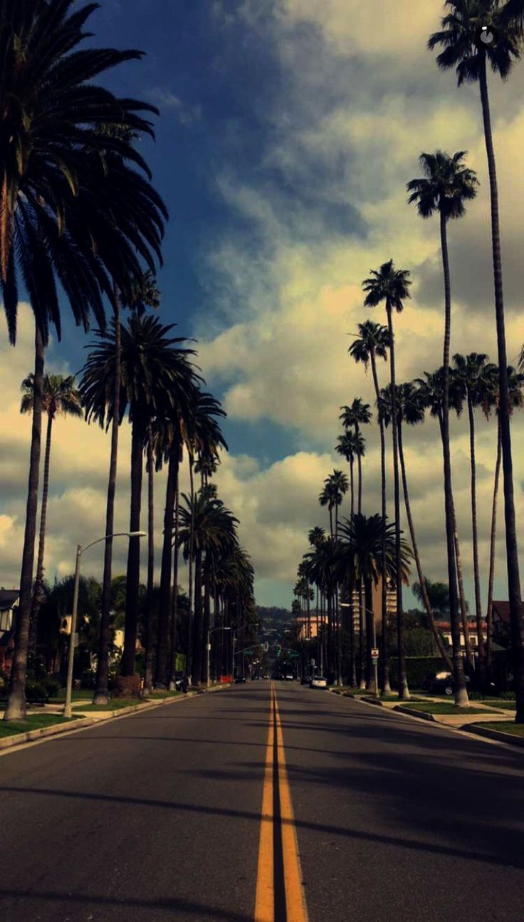 Thanksgiving Wallpapers For Iphone 6 Wallpapers Iphone 6 Funny If Desktop Gadgets And Sideba Palm Trees Wallpaper Tree Wallpaper Iphone Best Iphone Wallpapers