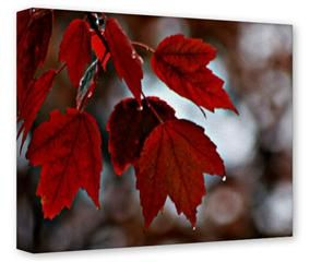 Gallery Wrapped 11x14x1.5  Canvas Art - Wet Leaves