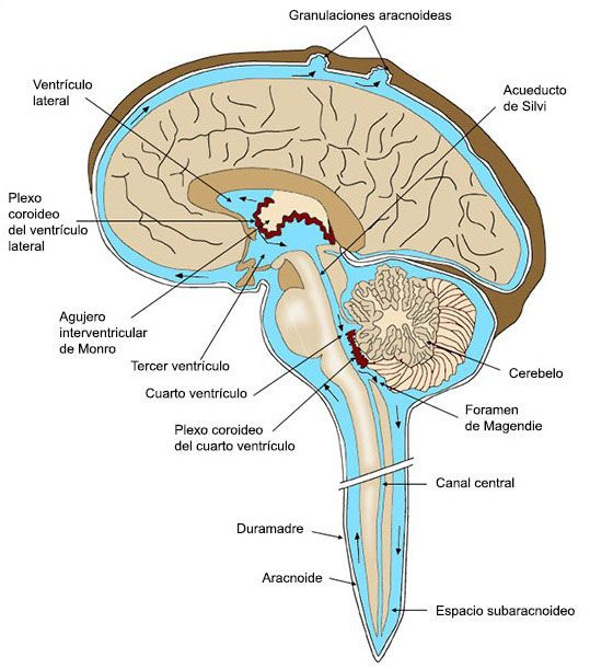 Líquido cefalorraquídeo en meningitis
