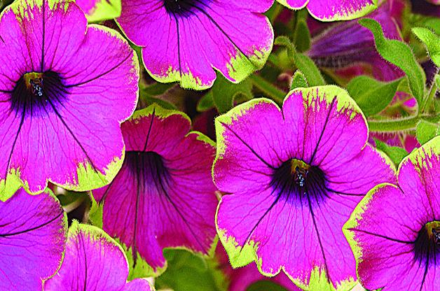 Top 10 Plants You Can T Kill Plants Flower Garden Flowers