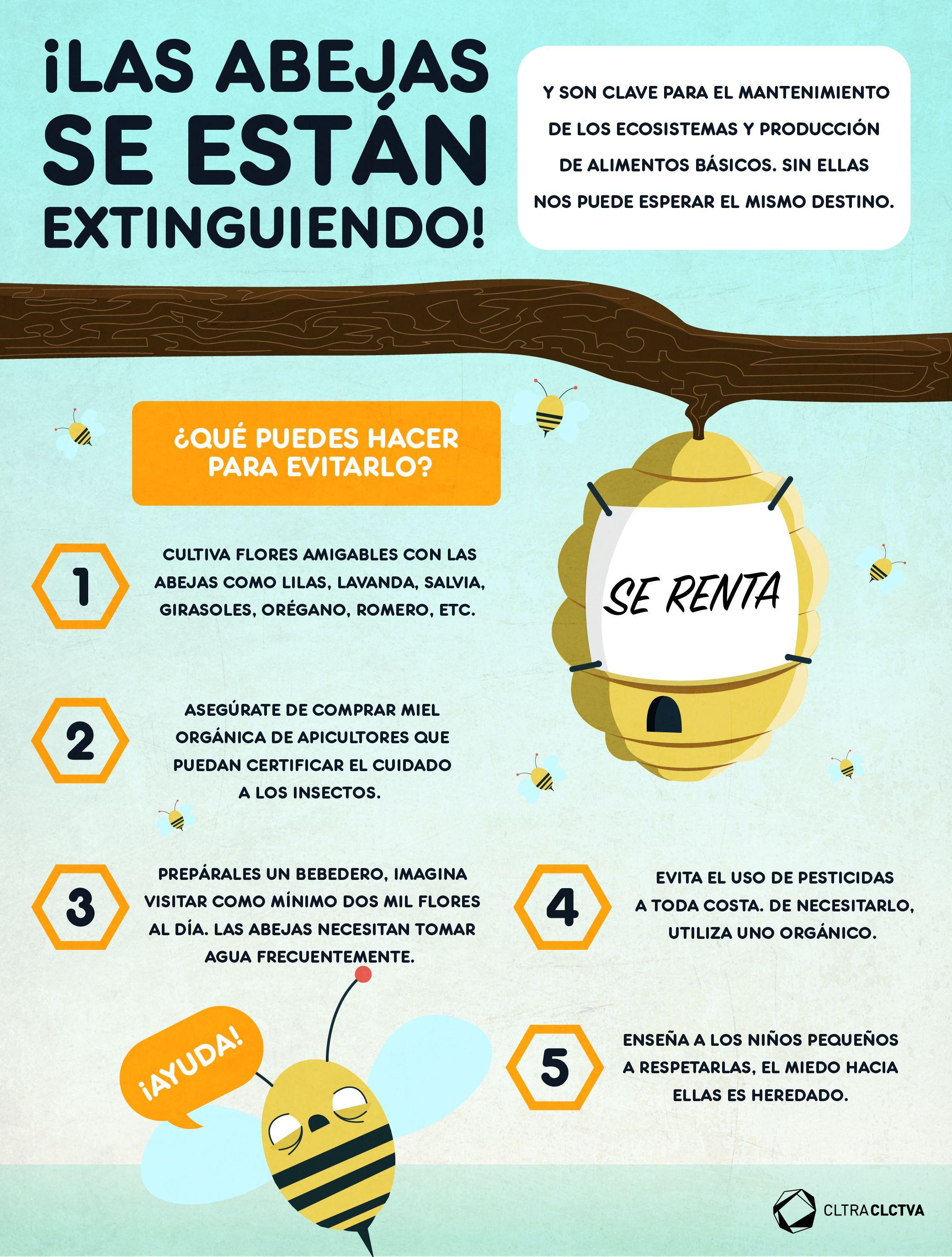 Cómo podemos evitar la extinción de las abejas? | #InfografíasCC ...