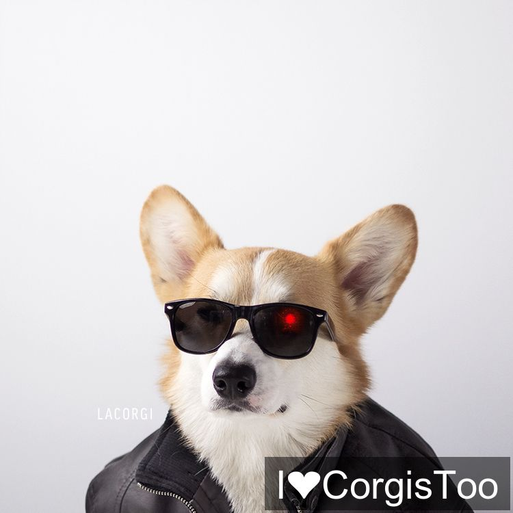WE are BACK! @ILoveCorgisToo  Miss you all!