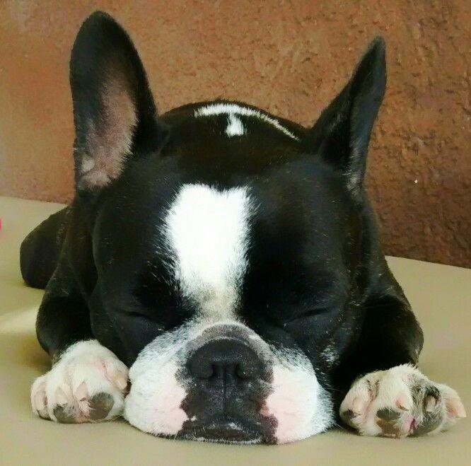 Adoro qdo ela dorme assim ❤