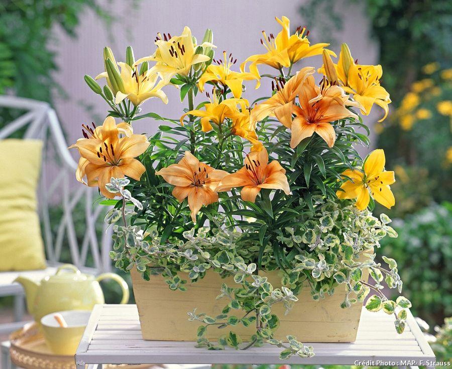 Les bons gestes du jardinier en janvier Planter des