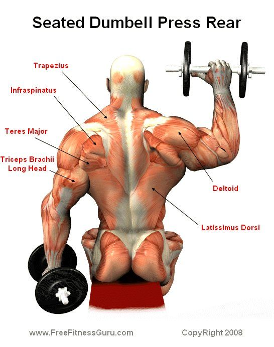 seated dumbell press rear | The Soul\'s Temple | Pinterest ...