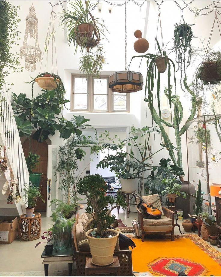 Best Home Decorating Websites Code 1105875159 House Plants Decor Jungle Decor Plant Decor
